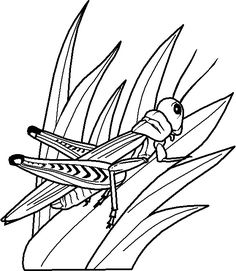 Grasshopper Coloring Page Animal Pages For Kids Thousands Of Free Printable