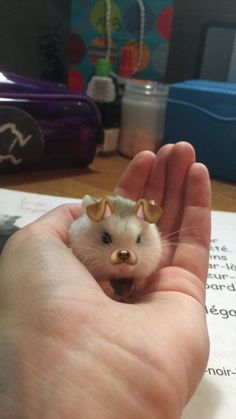 Snapchat Filters on a Hamster - Neatorama