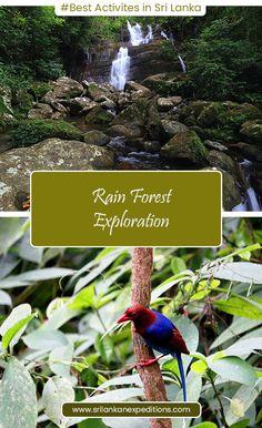 Tailor made Holidays in Sri Lanka Hiking Tours, Wildlife Safari, Adventure Tours, Beach Holiday, Bird Watching, Sri Lanka, Trekking, Trips, Viajes