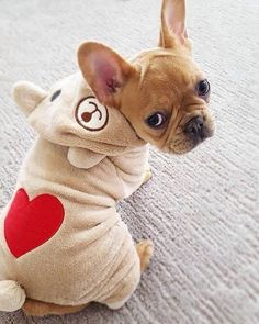Picking the right dog toys for your pet Little Puppies, Cute Puppies, Cute Dogs, Cute French Bulldog, French Bulldog Puppies, French Bulldogs, French Bulldog Clothes, American Bulldogs, Carlin