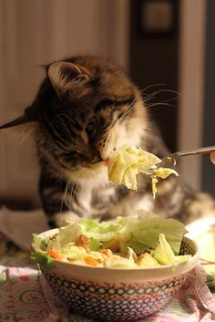 land-like-a-cat: Vegan Cat! Smart Cat!!!