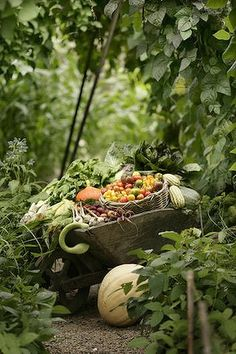 Abundant Produce. We'll have to gather our herbs and veggies like this at our enchanted garden! <3