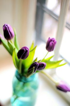 I love tulips :)