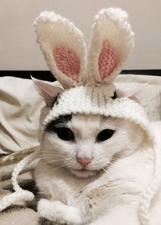 99 Best Easter Cats Images On Pinterest