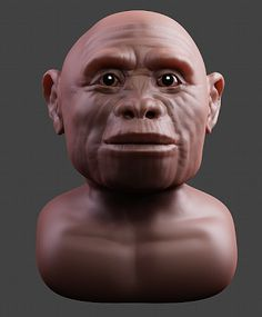 http://arc-team-open-research.blogspot.com.br/2013/03/homo-floresiensis-3d-forensic-facial.html