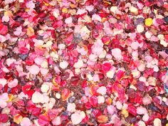 the red is just gorgeous...who else feels like they need to jump into this pile of leaves? www.fiskars.com