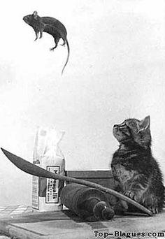Chaton qui joue avec une souris
