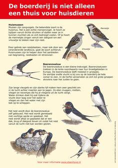 Infopaneel Boerenzwaluw en Huismus gemaakt voor Gemeente Amstelveen, http://iturl.nl/snVSmt