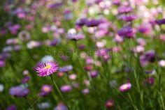 Free for Stockerpark member ... Flower in The Park | Photo | StockerPark