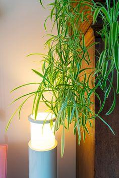 Enfin – JOELIX Planter Pots, Urban, Make It Yourself, Inspiration, Plants, Biblical Inspiration, Inspirational