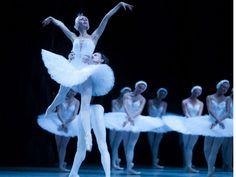 """A Companhia Brasileira de Ballet  está em turnê pelo Rio com o espetáculo """"O Lago dos Cisnes"""", uma das mais populares obras do compositor russo Tchaikovsky. As apresentações acontecem nesta sexta, 5, e sábado, 6, às 19h30 no Teatro Carlos Gomes, e no domingo, 7, às 17h."""