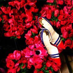 Christian Louboutin  Paralili amongst the petals #LoubiFeed