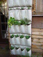 """VEGETABLES: """"Grow Up"""" in a Small Garden and Confound the Cats! What an awesome way to have an Herb garden if you don't have a garden to work with!What an awesome way to have an Herb garden if you don't have a garden to work with! Vertical Vegetable Gardens, Vertical Garden Diy, Vertical Planter, Vertical Bar, Vegetable Gardening, Shoe Rack Garden, Container Gardening, Gardening Tips, Urban Gardening"""