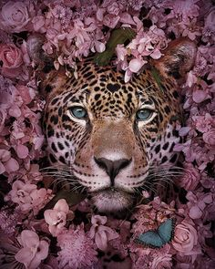This Visual Artist Uses His Magical Skills To Raise Awarenes.- This Visual Artist Uses His Magical Skills To Raise Awareness For Engangered Species 16 Stunning Animal Portraits By Andreas Häggkvist To Raise Awareness For Endangered Species - Beautiful Creatures, Animals Beautiful, Beautiful Images, Pretty Animals, Pretty Images, Cute Images, Beautiful Flowers, Tier Wallpaper, Animal Wallpaper
