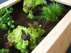 Pflanzkuebel Beton Modern Garten Hochbeet