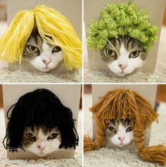 Woman Attaches Wigs to a Box, Her Cat Unknowingly Tries Them On - BlazePress