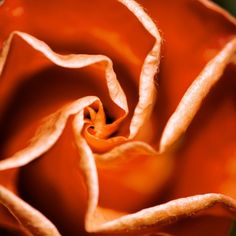 HIBISCUS 2021   Macro Flower Photography   Flower Photography   Photography   Abstract Art   Abstract Photography   Wall Art   Fine Art   Photo Art   Nature Photography   Artful home Abstract Photography, Nature Photography, Flower Photography, Fine Art Photo, Photo Art, Macro Flower, Hibiscus, Snack Recipes, Art Nature