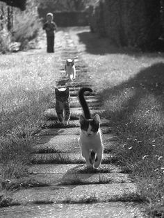 Can you picture the animals so naturally drawn to their Creator, like these sweet kitties making a bee-line for the camera? Cute Kittens, Cats And Kittens, Funny Cats, Funny Animals, Cute Animals, Crazy Cat Lady, Crazy Cats, Beautiful Cats, Animals Beautiful