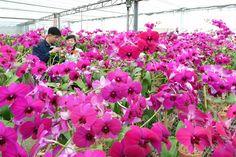 불멸의 꽃을 활짝 피워가며 -김일성화김정일화전시관에서-2