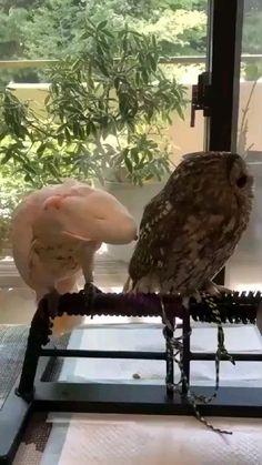Funny Animal Memes, Funny Animal Videos, Cat Memes, Funny Animals, Cute Animals, Funny Humor, Pet Videos, Funny Owls, Funny Birds