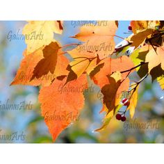 Autunm Leaves, Nature Photography, Digital Download, Wall Art, Office... (12 ILS) ❤ liked on Polyvore featuring home, home decor and wall art