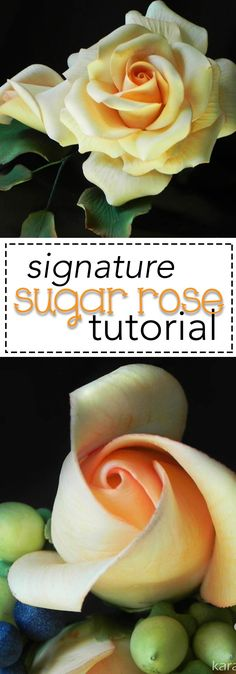 How to Make the Perfect Sugar Rose. Realistic sugar roses are easy when you know the tips and tricks! I'll show you in my fully narrated video tutorial. Join me!