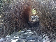 Most bowerbirds build a bower more like this.