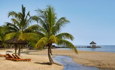 Palm tree paradise in Club Med La Plantation d'Albion all-inclusive resort in Mauritius.