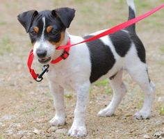 3 Common Leash Problems Solved: Pulling, Mouthing, Lunging