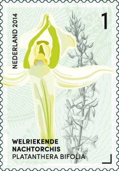 Wild Orchid, You Are The World, Flower Stamp, Postage Stamps, Bonsai, Netherlands, Orchids, Cards, Denmark
