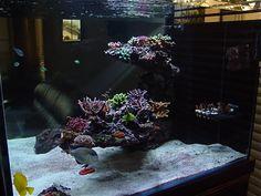 Top Reef Tank Aquascapes | Aquascape Reef