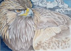 An original, one off portrait of a magnificent golden eagle painted from sketches and photos. This painting is inspired by these fabulous eagles seen at Skye in the Scottish Highlands. The artwork is in watercolour and gouache on art board, measures 40cm x 30cm and is sent in a card mount.