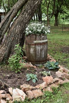 Favorite garden flower plants in a container for shade garden landscape and design. Rock border with Hostas, Tidal Wave Hydrangea, an old barrel filled with shade annuals, Impatiens. Planted in Zone 5 or 6, in the Midwest. Annual Flowers For Shade, Shade Flowers Perennial, Shade Annuals, Shade Garden Plants, Planting Flowers, Flower Plants, Flower Garden Layouts, Flower Garden Pictures, Garden Ideas