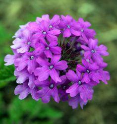22 Best Flowers For Full Sun. Potted Plants PatioGarden ...