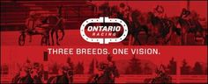Ontario Racing (OR) is pleased to announce that Heather MacKay Roberts, marketing director at Kawartha Downs, is the successful candidate to represent the regional racetrack perspective on the OR Board of Directors. Harness Racing, Regional, Ontario, Perspective, Boards, Success, Marketing, Movie Posters, Planks