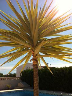 Palme i soloppgangen i Spania