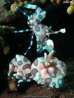 Shrimps and Prawns - sea and ocean life Underwater Creatures, Underwater Life, Ocean Creatures, Weird Creatures, Beautiful Sea Creatures, Animals Beautiful, Poisson Mandarin, Fauna Marina, Life Under The Sea