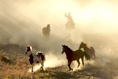 Horses and cowboy Wall Mural | Eazywallz