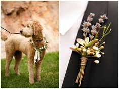 Blush mountain wedding at Louland Falls | Doggy Ring Bearer | Logan Walker Photography - see more at http;//fabyoubliss.com