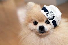 Cute sailor pom pom ♡