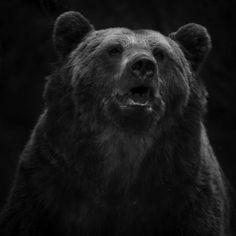 """""""Karhu ja hirvi ovat suomalaisen mytologian taivassyntyisiä. Ne ovat Ylisessä syntyneitä ja sieltä laskettu alas maan pinnalle, ihmisten maailmaan. Karhu oli esi-isiemme suuresti kunnioittama hahmo. Sillä oli erityisasema eläinten joukossa, oikeastaan sen ajateltiin olevan jotain ihmisen ja eläimen väliltä. Sillä oli yhteys henkiin ja toisiin maailmoihin."""" – Heikki Willamo Brown Bear, Animals, Tea, Face, Pictures, Animales, Animaux, Animal, The Face"""