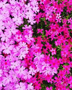 Lowe's Northeast region gardening expert looks at the garden from the ground up and finds plants that fill in nicely and look good too. Hd Wallpapers For Mobile, Mobile Wallpaper, Creeping Phlox, Diy Garden Projects, Shade Plants, Lawn And Garden, Vinyl Records, Backyard, Cover
