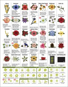 Paper Blossoms Flower Guide