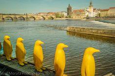 Prague's public and street art scene - a highlight tour of Prague's amazing public art, sculpture and street art