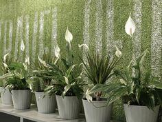 Andrii Bondarenko on Behance Tourist Agency, Agency Office, Interior Design Photography, Office Interiors, Cactus Plants, Behance, Cacti, Cactus