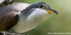 Protect Threatened Birds in New Mexico's Pristine Gila River Area