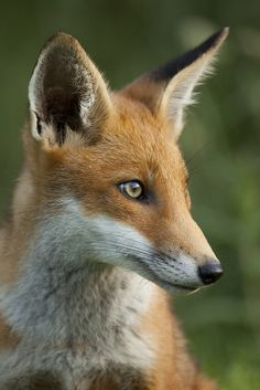 I'm Luke. Foxes are very mistaken about me. I have no mate, like anyone would like me. I'm a good hunter, hunting mostly Is the only thing that makes me happy. That's mostly all you want to know