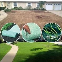 A beautiful lawn can be cultivated in four weeks!No manual care is required, just watering. Garden Yard Ideas, Backyard Patio Designs, Lawn And Garden, Modern Backyard, Nice Backyard, Backyard Retreat, Garden Club, Garden Projects, Backyard Ideas
