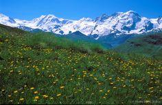 Swiss Alps | Swiss Alps, Zermatt