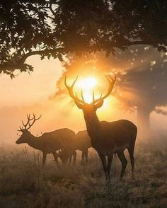 Breathtaking Photos Of British Wildlife Animals - The Forest King By Max Ellis Monarch In Freezing Fog By Max Ellis Halo Of Fire One Of Those Golden Mornings Hazy Sunset With Stags Halo Of Fire By Max Ellis Contemporary Art Prints For Sale Just Nature Animals, Animals And Pets, Cute Animals, Wildlife Photography, Animal Photography, Newborn Photography, Nature Pictures, Animal Pictures, Beautiful Creatures